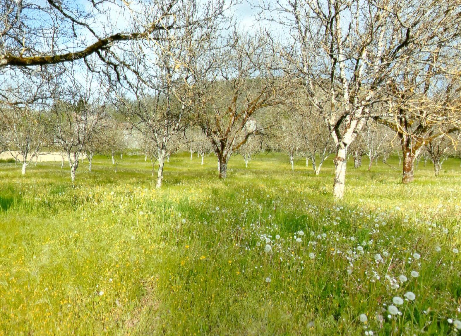Le terrain possède une vue dégagée sur les collines environnantes et est grandement arboré.