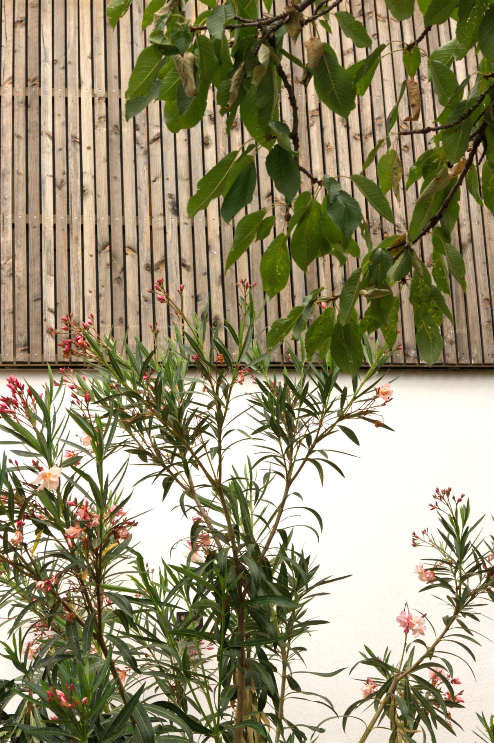 Détail ouverture - bardagebois-surélévation maison B-architectes toulouse - saarchitectes